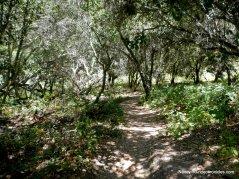 laurel canyon trail