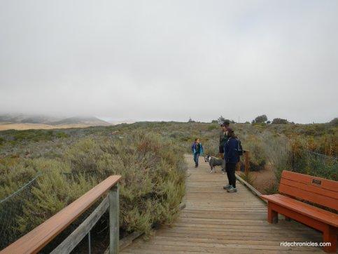 Bush Lupine Point