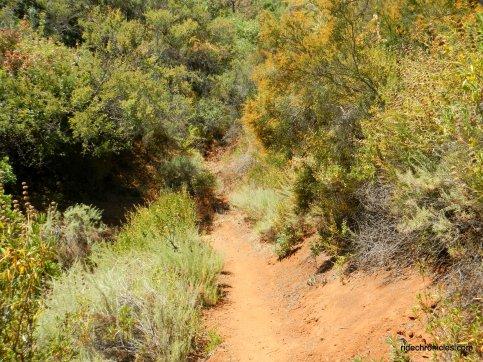 tick wood trail