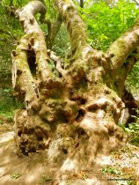 grotesque trunk