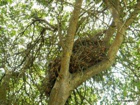 huge animal/bird nest