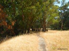 single track bay view trail