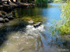 lake anza swimming