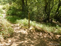 stay on wildcat gorge trail