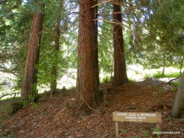 selby trail-redwood grove