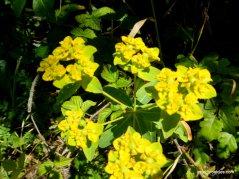 green yellow flowers