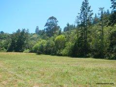 lone oak meadow