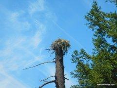 Hwy 116 W-osprey nest