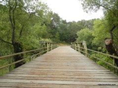 bridge over moraga creek