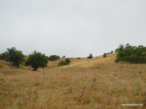 rimer creek trail view