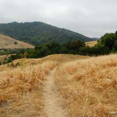 to king's canyon loop trail