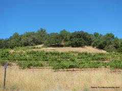 alameda del prado vineyard