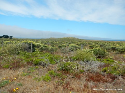 coastal scrub-grasslands