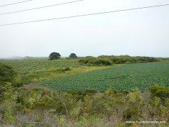 coastal farmlands