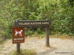 tilden nature area-wildcat creek trail