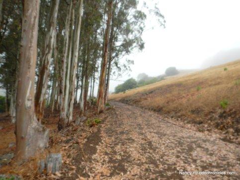 de laveaga trail-eureka peak
