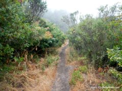 bay area ridge trail