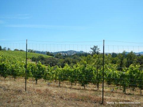 ridge top vineyard
