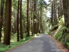 roll through the redwoods