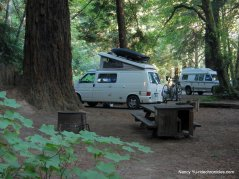 campground redwoods