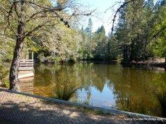 bower community park pond