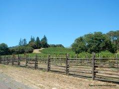 CA-128 W-anderson valley vineyards