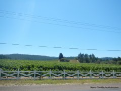 CA-128 W-anderson valley vineyards