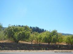 CA-128 W -anderson valley
