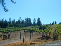philo greenwood rd vineyards
