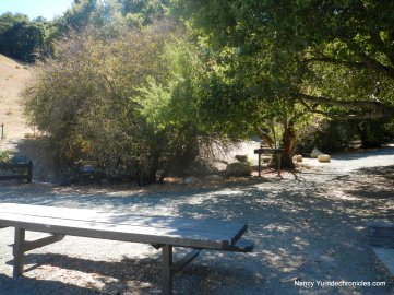 Shady picnic area