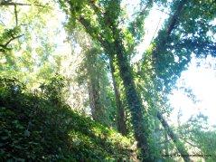 bridgeview trail