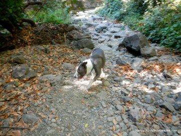 sausal creek