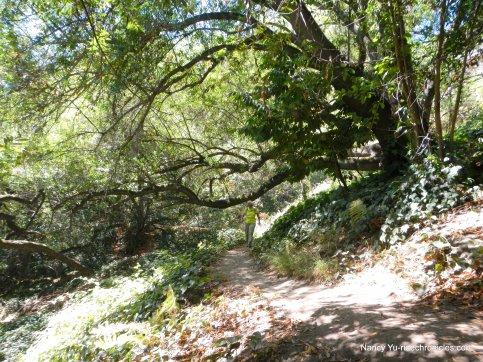 park blvd trail