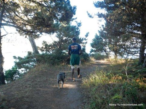 mendocino headlands pines