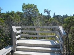 pygmy forest boardwalk