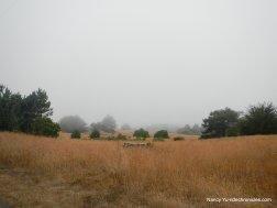 coastal prairie grasslands