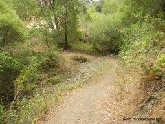 through buckhorn creek
