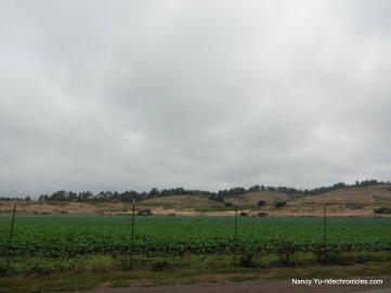 HMB farmland
