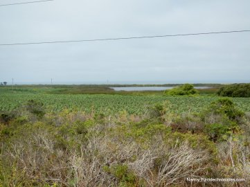 coastal farm land