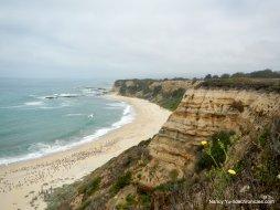 coastal beach-pelicans