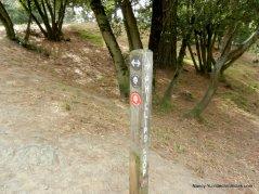 stay on east ridge trail