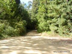stream trail