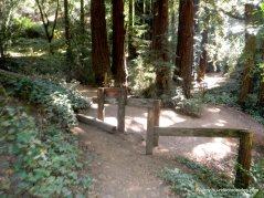 palos colorados trail