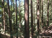 sequoia bayview trail