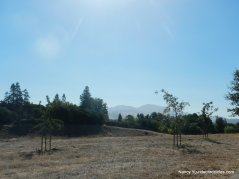 canal trail-view of diablo