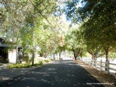 calle arroyo