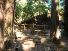 fern ravine trail