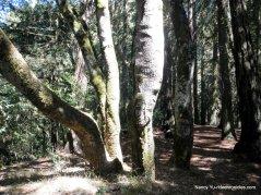 big trees trail