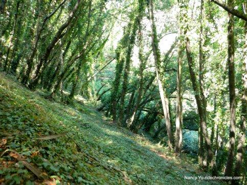 upper sinawik trail