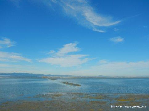 south bay/salt marsh